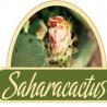 Sahara Castus